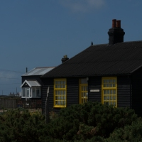 Blooming Dungeness